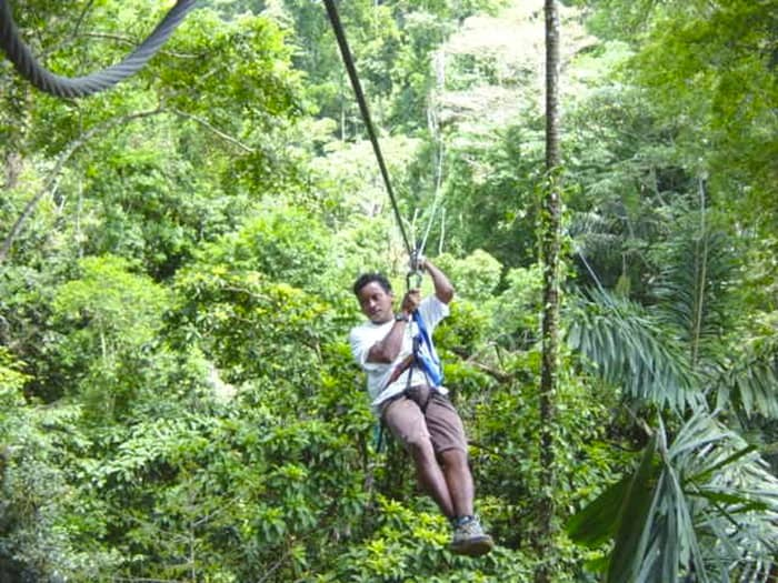rainforest_canopy
